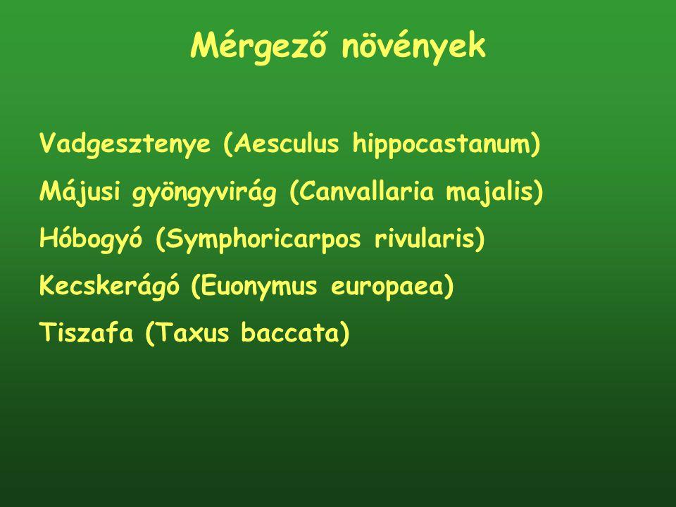 Mérgező növények Vadgesztenye (Aesculus hippocastanum)