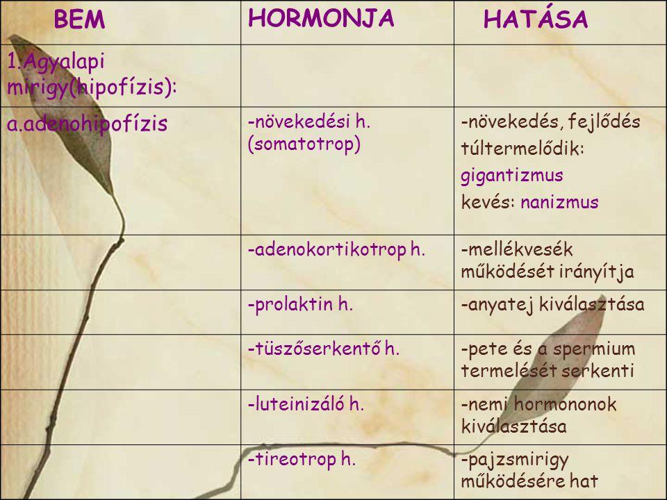 BEM HATÁSA HORMONJA 1.Agyalapi mirigy(hipofízis): a.adenohipofízis