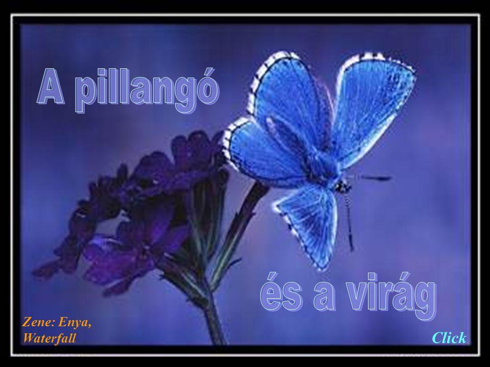 A pillangó és a virág Zene: Enya, Waterfall Click