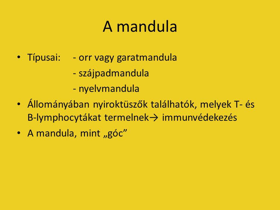 A mandula Típusai: - orr vagy garatmandula - szájpadmandula