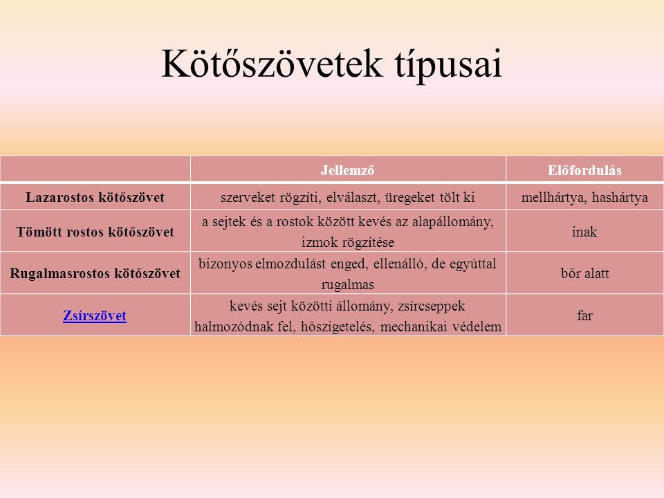 Kötőszövetek típusai Jellemző Előfordulás Lazarostos kötőszövet