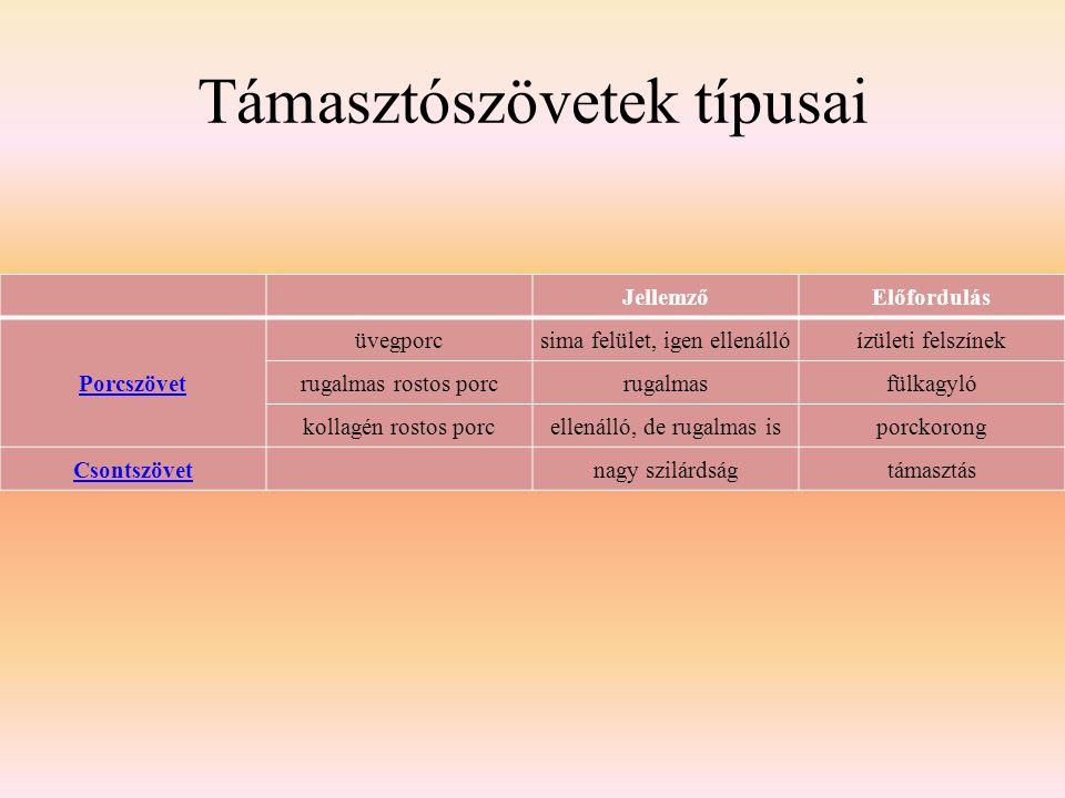 Támasztószövetek típusai