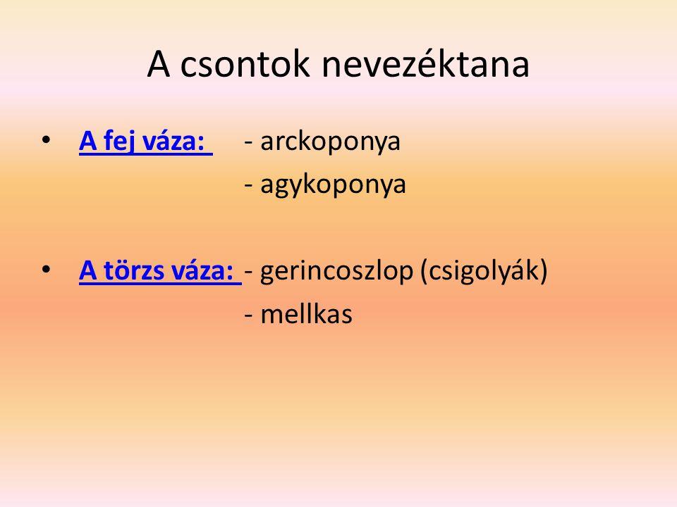 A csontok nevezéktana A fej váza: - arckoponya - agykoponya