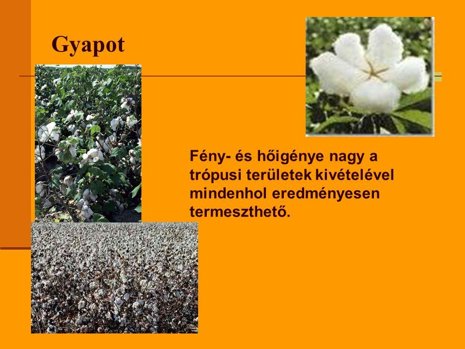 Gyapot Fény- és hőigénye nagy a trópusi területek kivételével mindenhol eredményesen termeszthető.