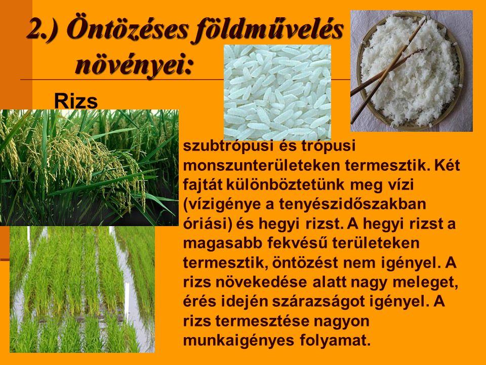 2.) Öntözéses földművelés növényei: