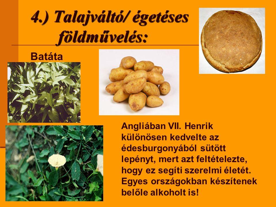 4.) Talajváltó/ égetéses földművelés: