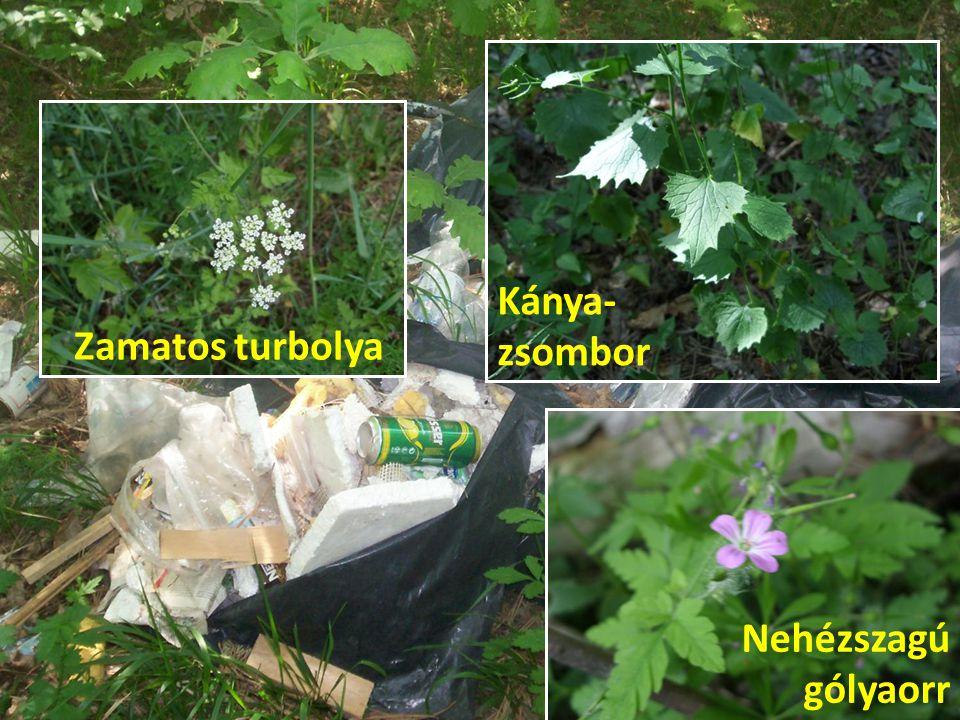 Kánya-zsombor Zamatos turbolya Nehézszagú gólyaorr