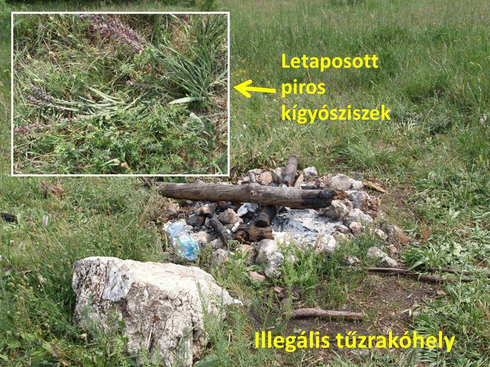 Illegális tűzrakóhely