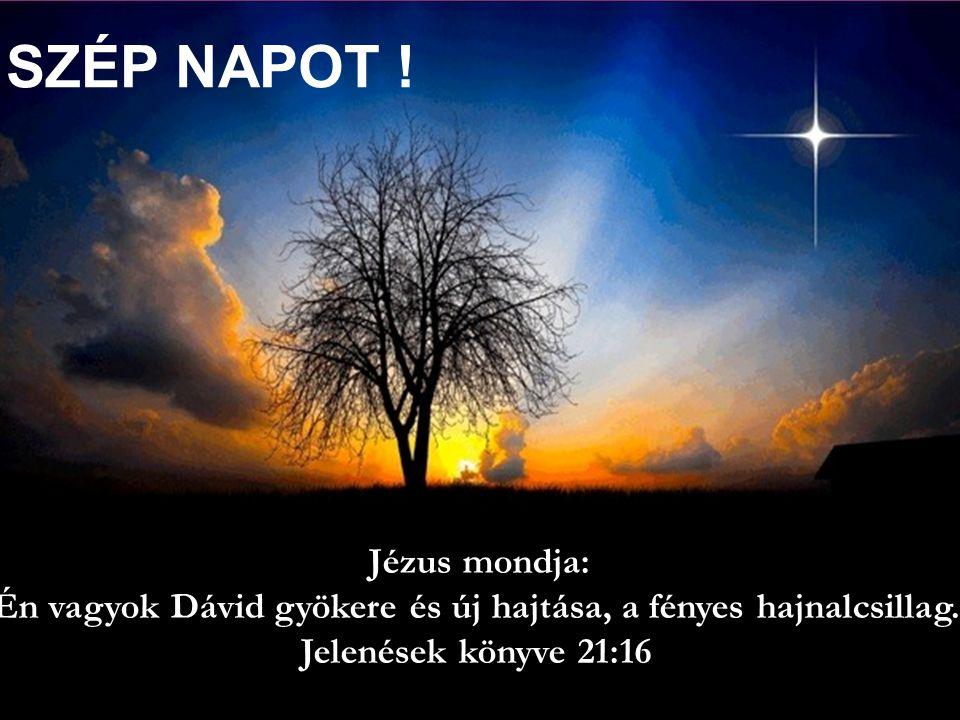 Én vagyok Dávid gyökere és új hajtása, a fényes hajnalcsillag.