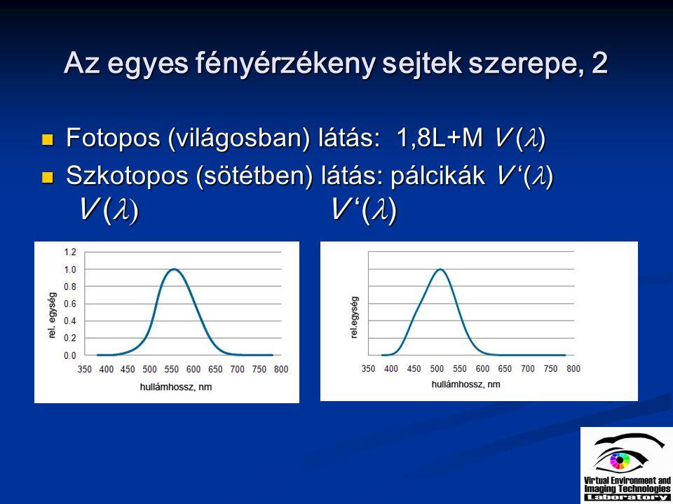 Az egyes fényérzékeny sejtek szerepe, 2