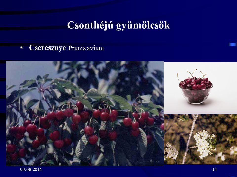 Csonthéjú gyümölcsök Cseresznye Prunis avium 04.04.2017