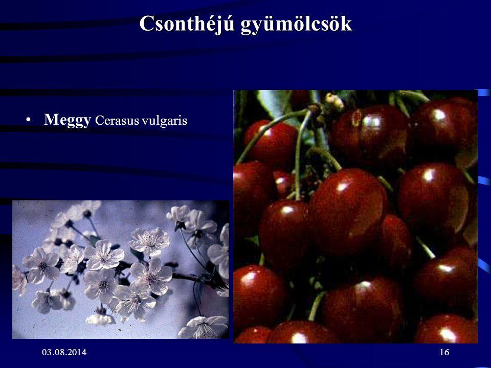 Csonthéjú gyümölcsök Meggy Cerasus vulgaris 04.04.2017