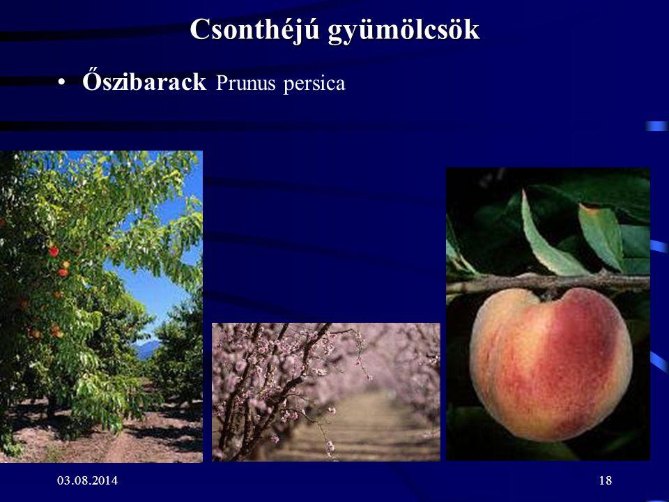 Csonthéjú gyümölcsök Őszibarack Prunus persica.