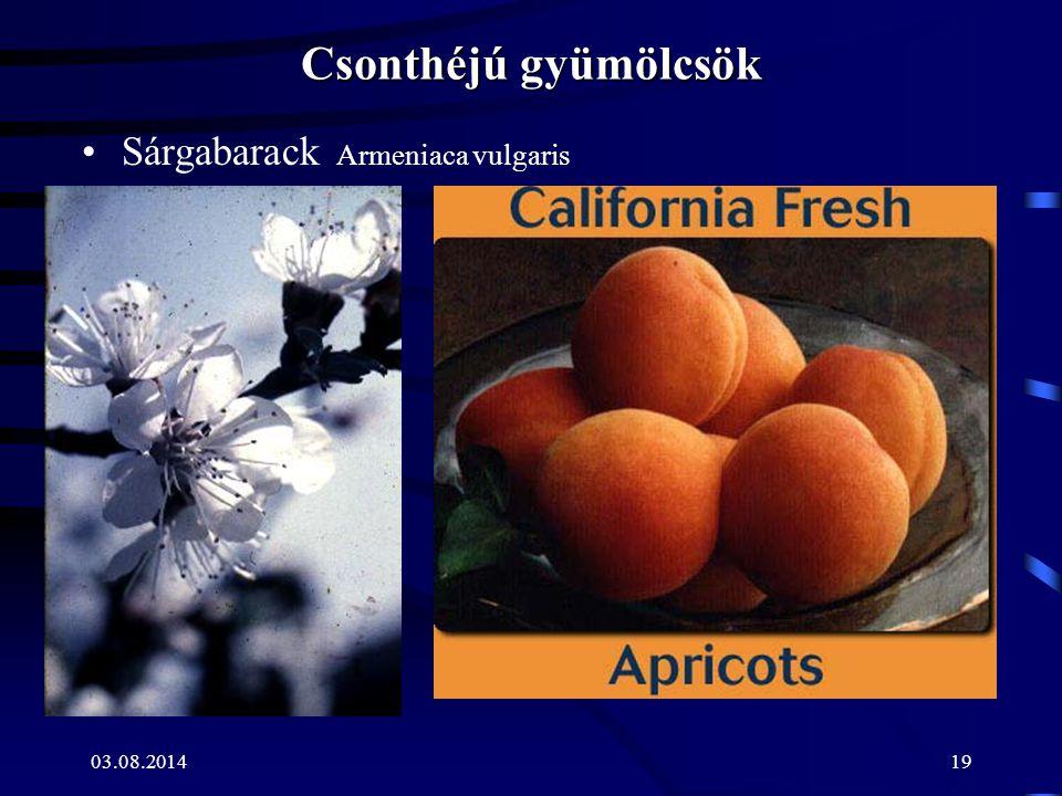 Csonthéjú gyümölcsök Sárgabarack Armeniaca vulgaris 04.04.2017