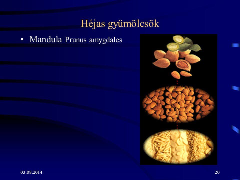 Héjas gyümölcsök Mandula Prunus amygdales 04.04.2017