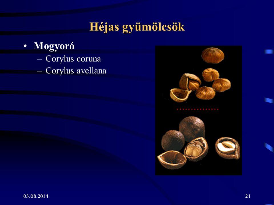 Héjas gyümölcsök Mogyoró Corylus coruna Corylus avellana 04.04.2017