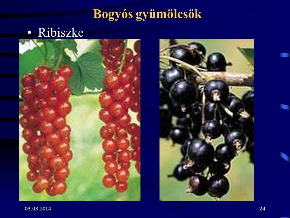Bogyós gyümölcsök Ribiszke 04.04.2017
