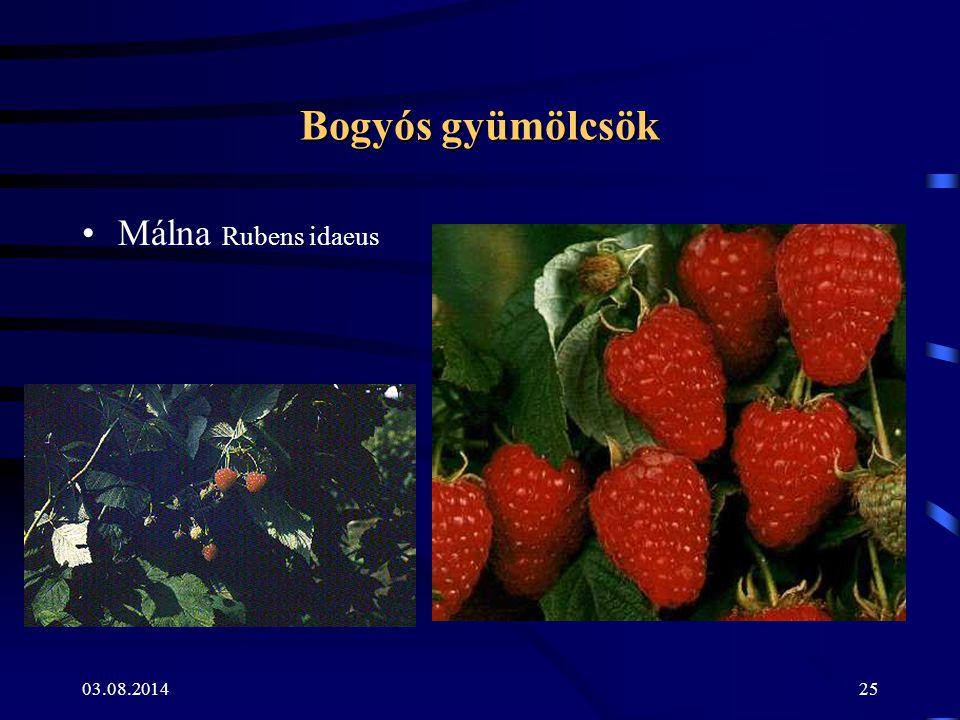 Bogyós gyümölcsök Málna Rubens idaeus 04.04.2017
