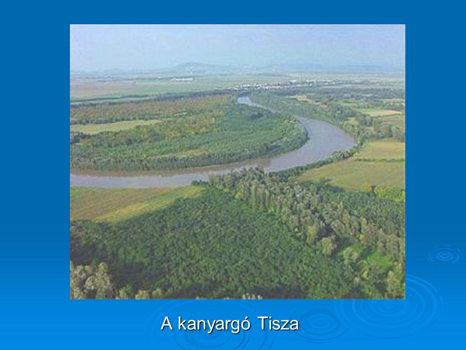 A kanyargó Tisza