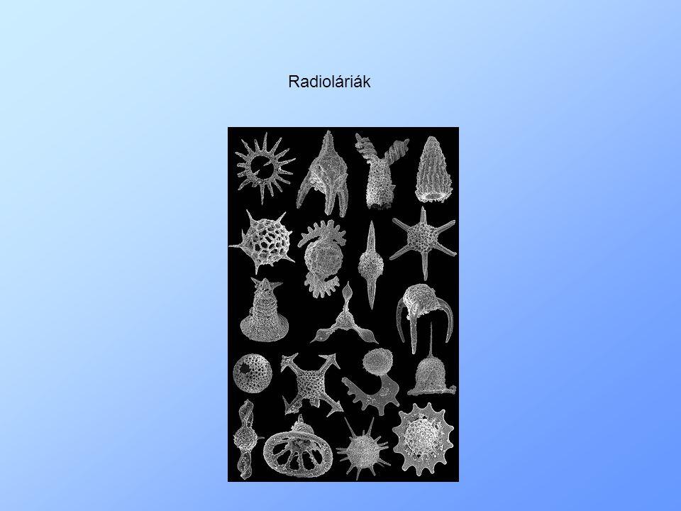 Radioláriák