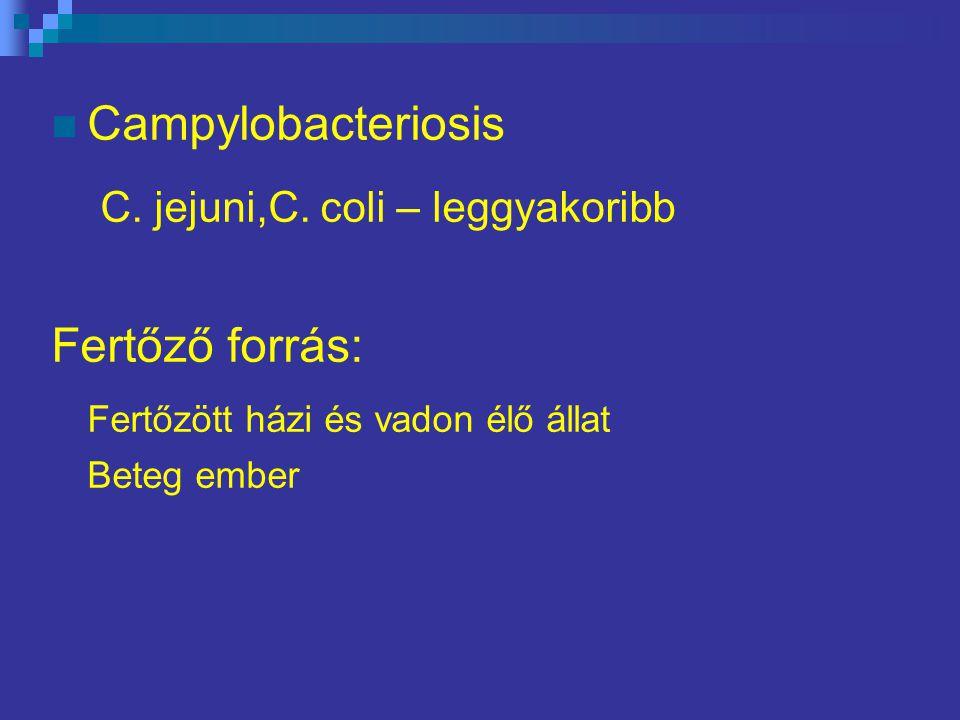 C. jejuni,C. coli – leggyakoribb