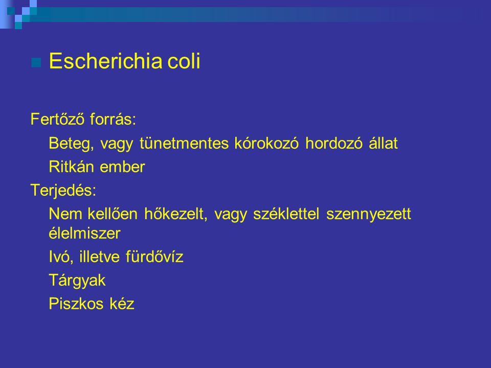 Escherichia coli Fertőző forrás: