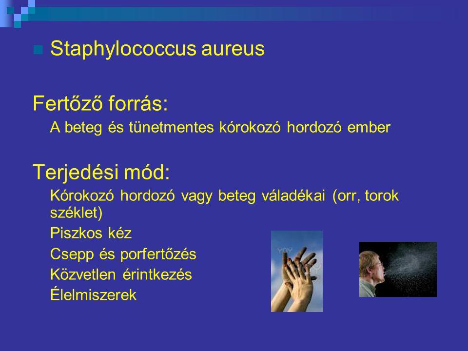 Staphylococcus aureus Fertőző forrás: