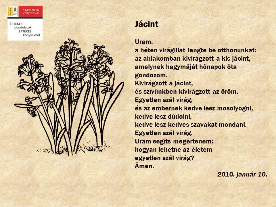 Jácint Uram, a héten virágillat lengte be otthonunkat: