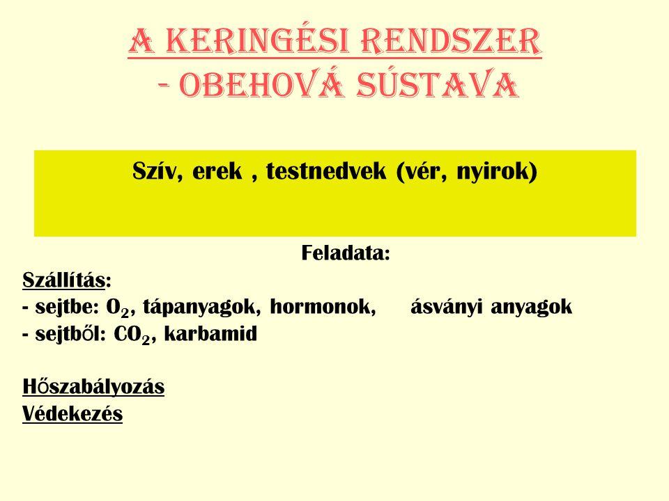 A KERINGÉSI RENDSZER - Obehová sústava