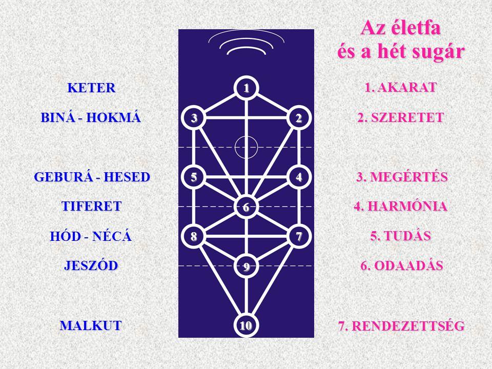 Az életfa és a hét sugár KETER 1. AKARAT BINÁ - HOKMÁ 2. SZERETET
