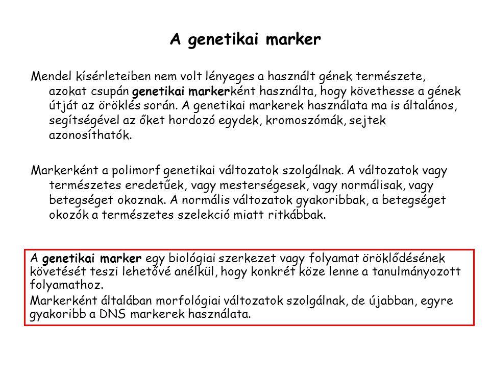 A genetikai marker