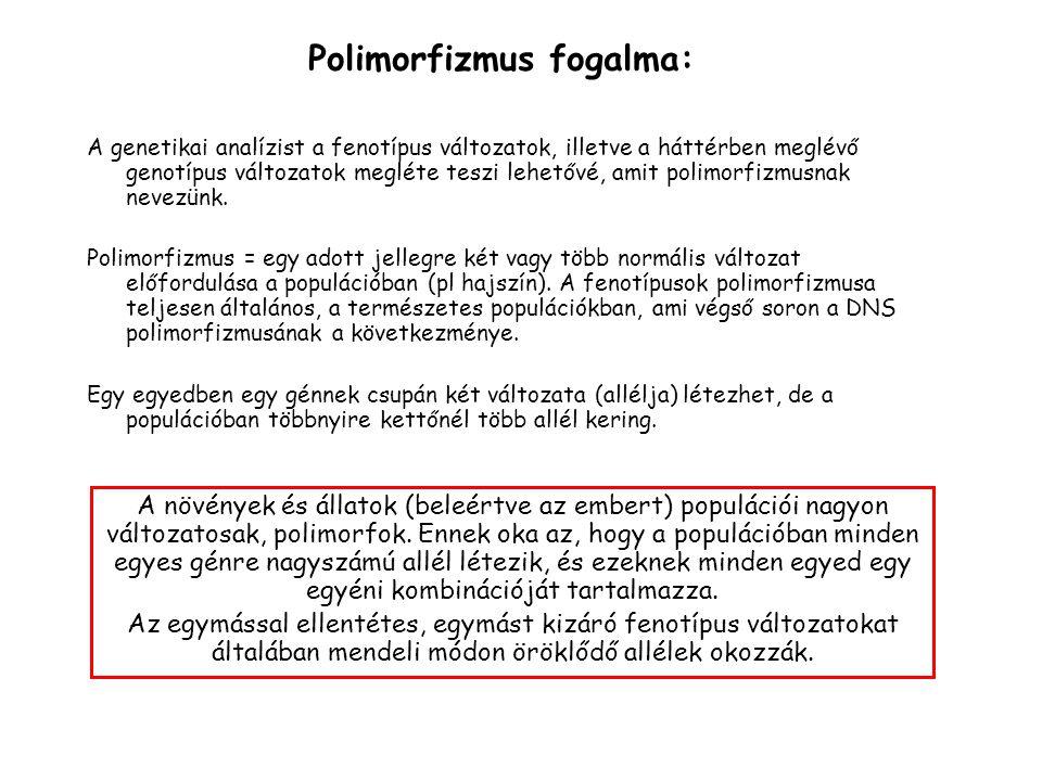 Polimorfizmus fogalma: