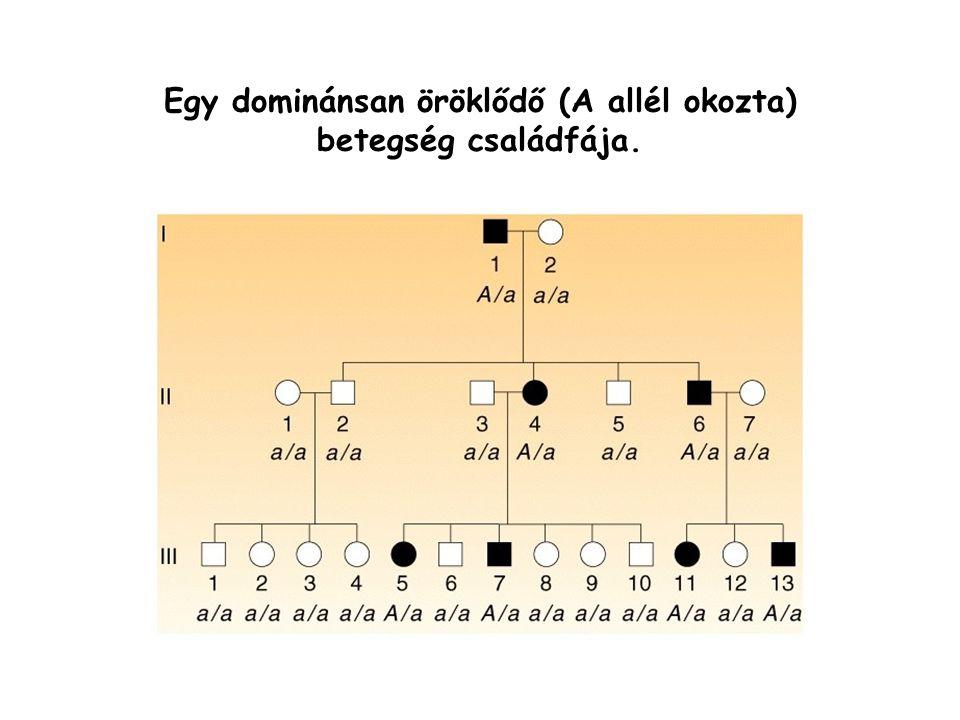Egy dominánsan öröklődő (A allél okozta) betegség családfája.