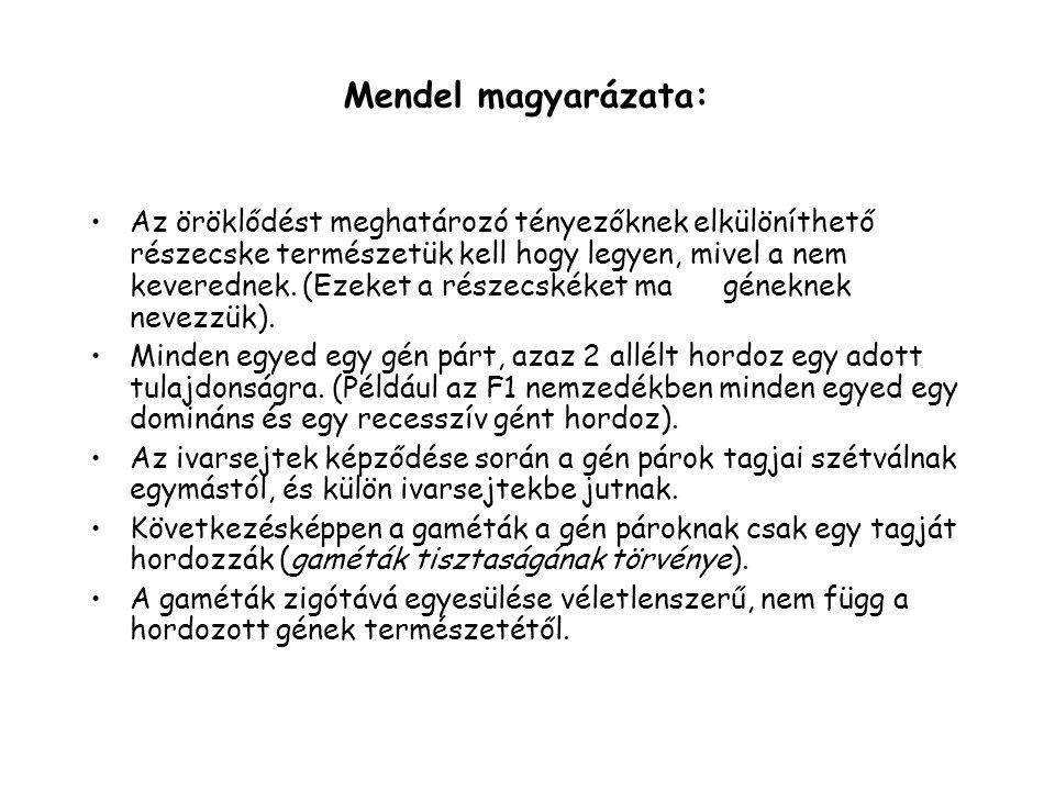 Mendel magyarázata:
