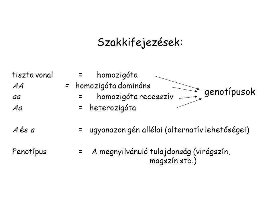 Szakkifejezések: genotípusok tiszta vonal = homozigóta
