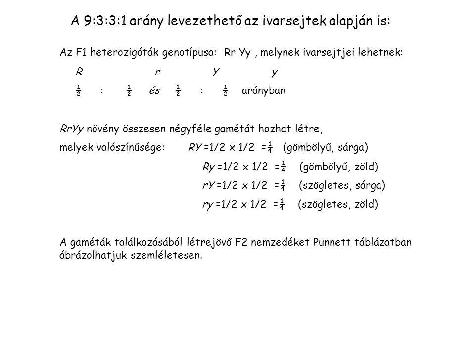 A 9:3:3:1 arány levezethető az ivarsejtek alapján is: