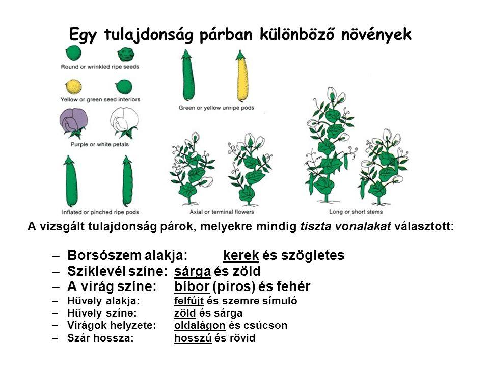 Egy tulajdonság párban különböző növények