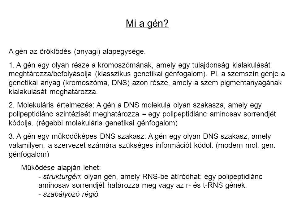 Mi a gén A gén az öröklődés (anyagi) alapegysége.
