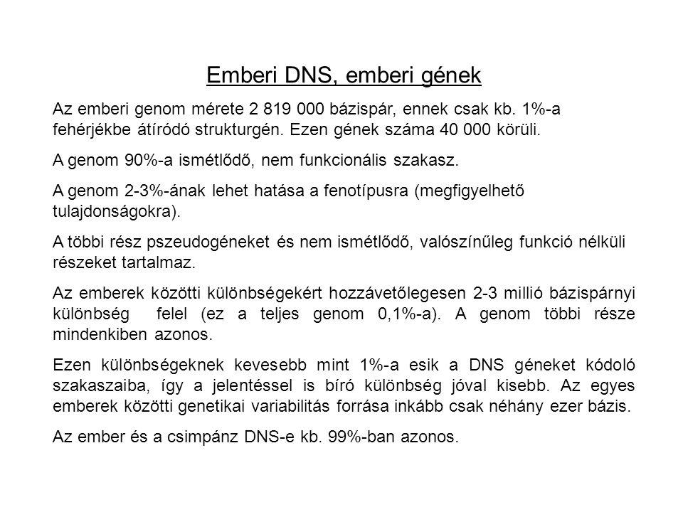 Emberi DNS, emberi gének