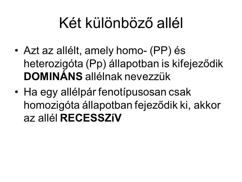 Két különböző allél Azt az allélt, amely homo- (PP) és heterozigóta (Pp) állapotban is kifejeződik DOMINÁNS allélnak nevezzük.