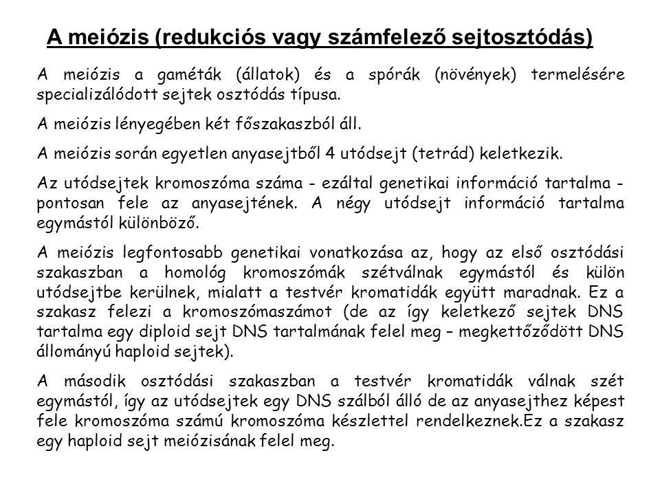 A meiózis (redukciós vagy számfelező sejtosztódás)