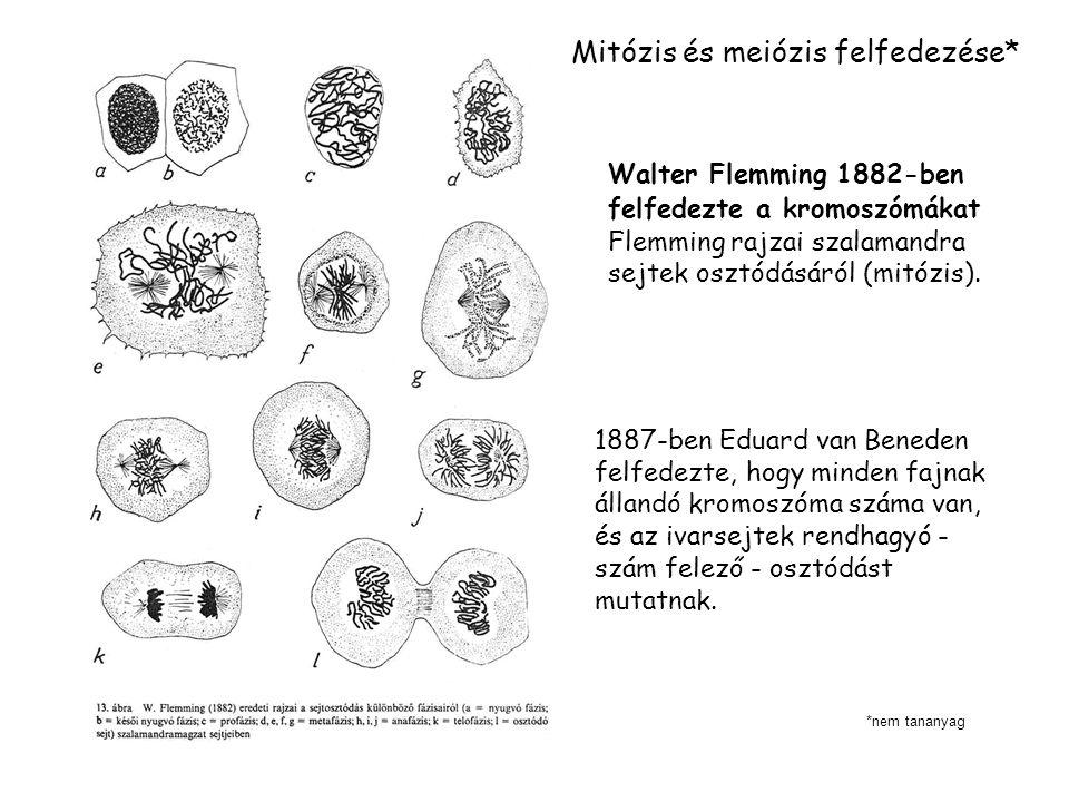 Mitózis és meiózis felfedezése*
