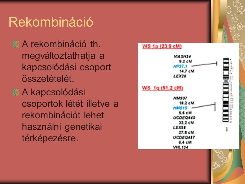 Rekombináció A rekombináció th. megváltoztathatja a kapcsolódási csoport összetételét.