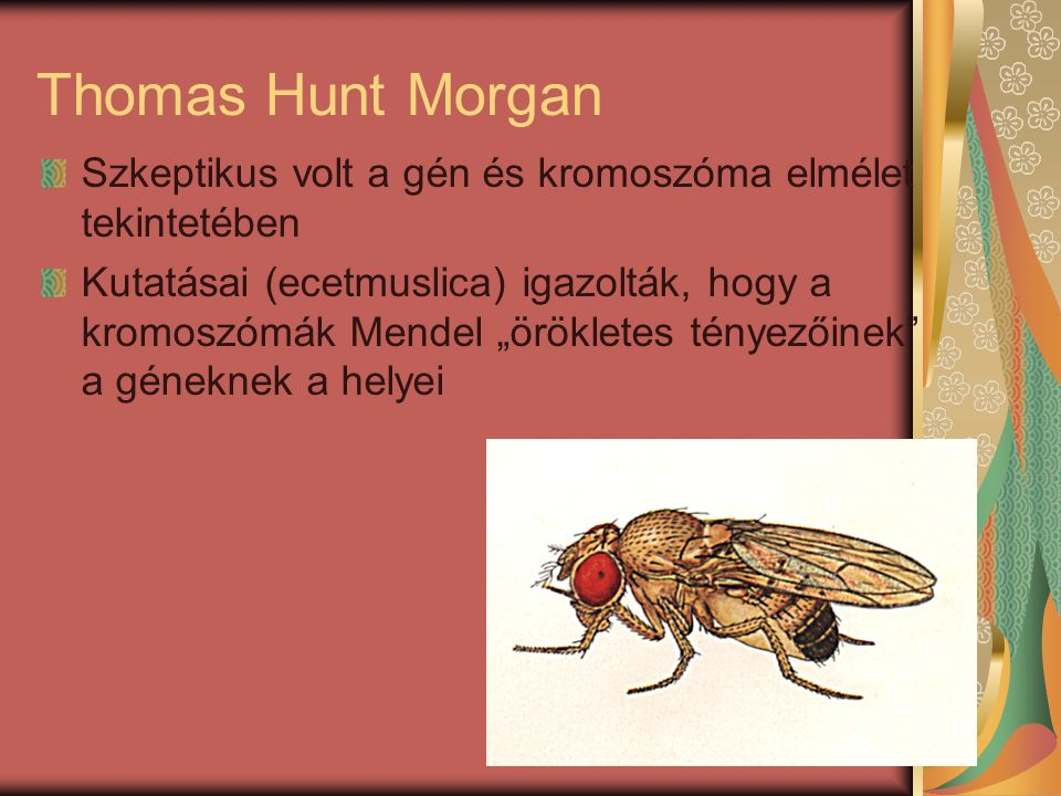 Thomas Hunt Morgan Szkeptikus volt a gén és kromoszóma elmélet tekintetében.