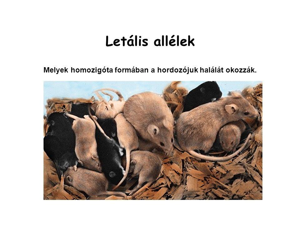 Letális allélek Melyek homozigóta formában a hordozójuk halálát okozzák.