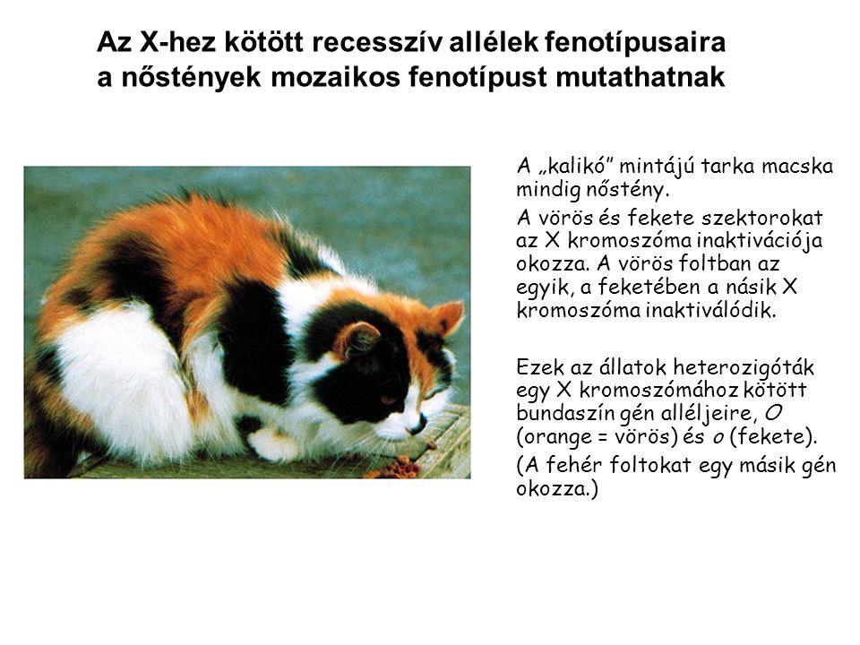 Az X-hez kötött recesszív allélek fenotípusaira