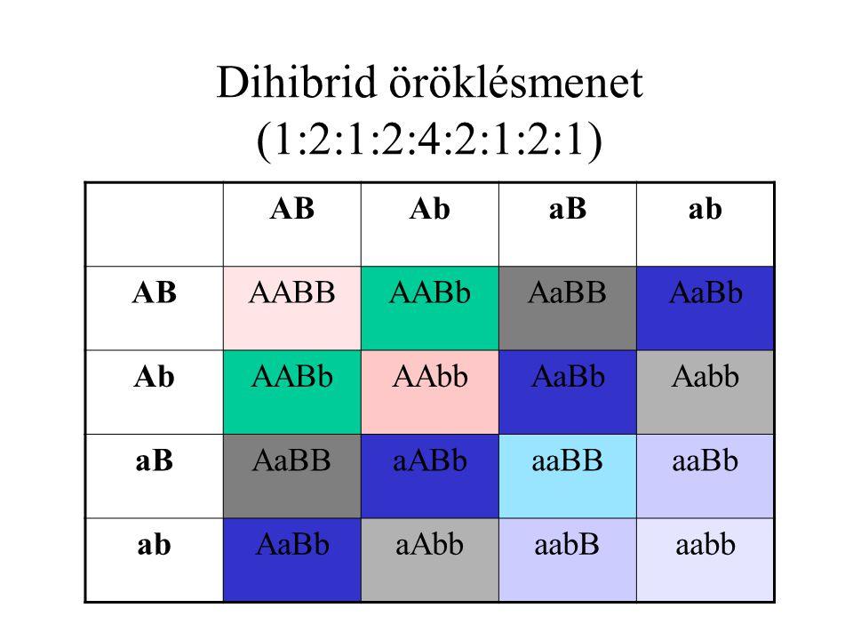 Dihibrid öröklésmenet (1:2:1:2:4:2:1:2:1)