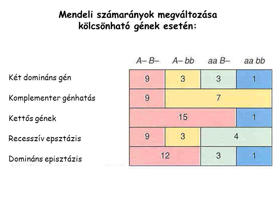 Mendeli számarányok megváltozása kölcsönható gének esetén: