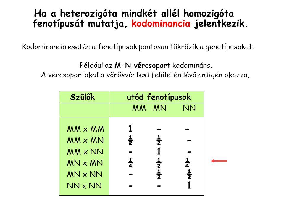 Ha a heterozigóta mindkét allél homozigóta fenotípusát mutatja, kodominancia jelentkezik.