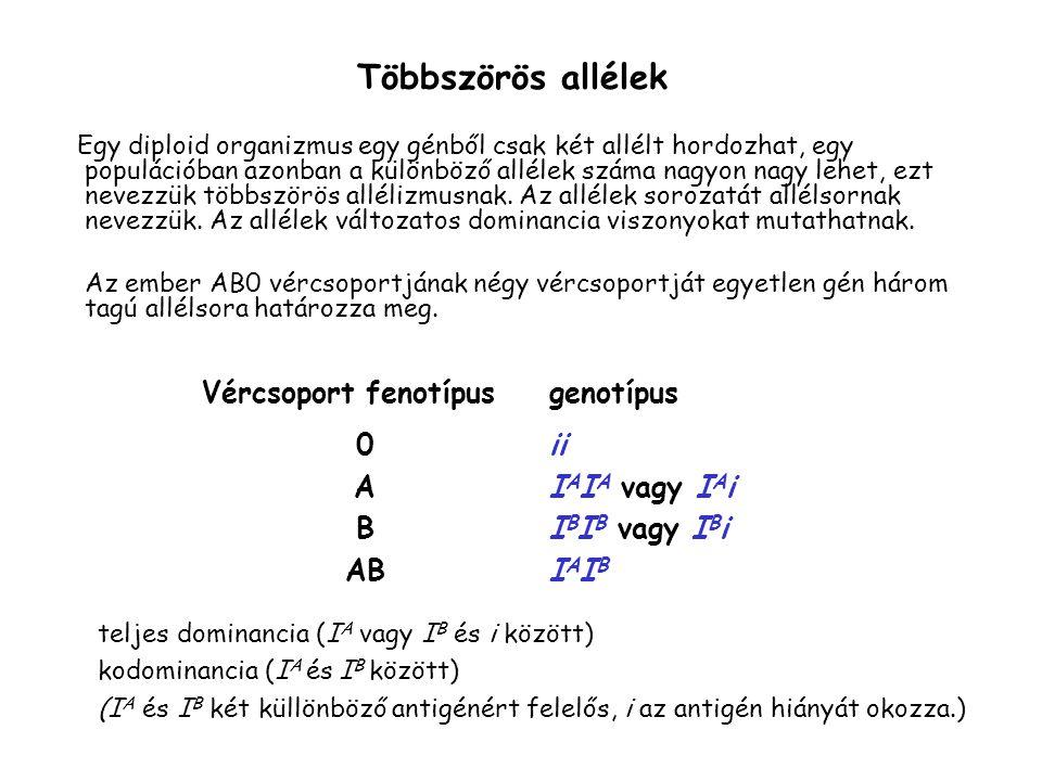 Többszörös allélek Vércsoport fenotípus genotípus A B AB ii